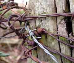 Rustic Barb Wire Fence Post   One Pink Goose: Umbellifer Tree And Rusty Barbed Wire