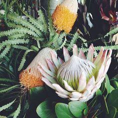 Protea | @designconundrum