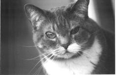 My Beloved Friend Sabrina.  Gone but not forgotten