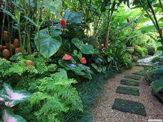 jardin tropical - Buscar con Google