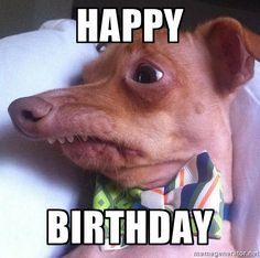 "Happy Birthday - Tuna, the ""Phteven"" dog"