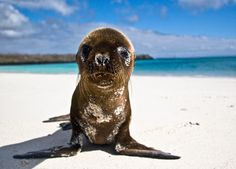 Galapagos Pup - what a cutie