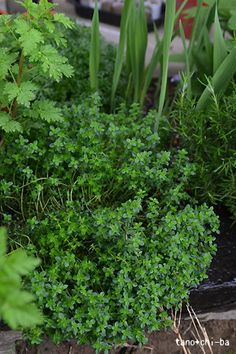 I love cooking with fresh herbs. Thyme smells so good...