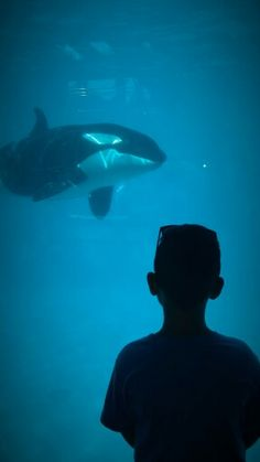 #killer_whale #sea_world