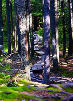 """Megunticook Trail, Camden Hills State Park, Maine Hike the roughly three-mile trail all the way to Ocean Clearly marked, well maintained and challenging enough for a decent workout towards the top."""""""