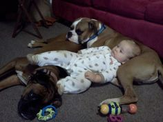 this is why boxers are the best dogs ever