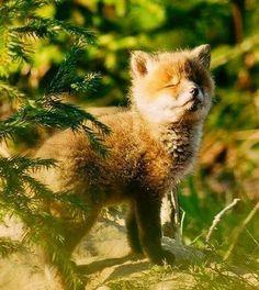 Baby fox enjoying the sun! Woodland Creatures, Cute Creatures, Beautiful Creatures, Animals Beautiful, Nature Animals, Animals And Pets, Wild Animals, Cute Baby Animals, Funny Animals