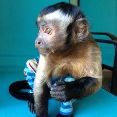 Instagram photo by @Becklee Niemchak (monkeymombex) | Statigram