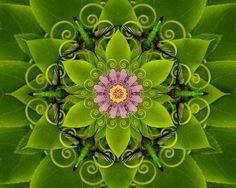 passion flower mandala