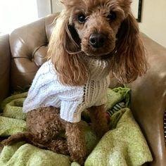 Crochet Dog Harness Dog Dress Small dog clothes Harness and Leash Handmade Pet Harness Dog harness vest Dog Top Pet Clothing BubaDog Crochet Dog Clothes, Crochet Dog Sweater, Small Dog Sweaters, Small Dog Clothes, Chihuahua Clothes, Puppy Clothes, Dog Sling, Pull Crochet, Cat Harness