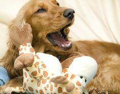 Como combater o mau hálito do meu cachorro. Não cuidar da higiene bucal do nosso cachorro pode desencadear um excesso de placa bacteriana e, com isso, um mau hálito. As raças pequenas são as que têm mais probabilidades de acumular sarro em seus...