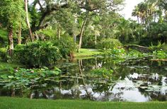 Vero Beach, FL: McKee Botanical Garden...18 acres of lush and exotic tropicals