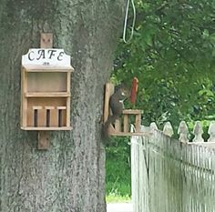 The squirrels argue over who gets the bench. Gonna build a round table with a seat all around.