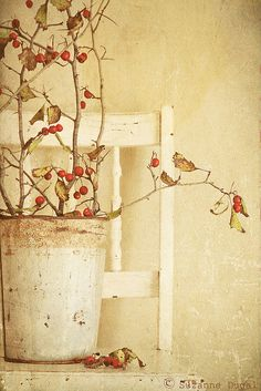 El Fotógrafo invidente~I might pin this to a couple of boards. I like the idea of a delicately sparse berry branch in rustic white, sitting on a peeling white cottage chair for Christmas decor. So cool.