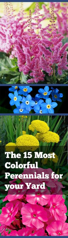 The 15 Most Colorful Perennials for your Yard Read at : craftsome.blogspot.com