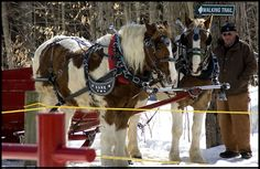 In consideration of realities of threat, sadly this weekend's Warkworth Maple Syrup Festival has been cancelled. Sleigh Rides, Hour And A Half, North Shore, Ontario, Most Beautiful, Canada