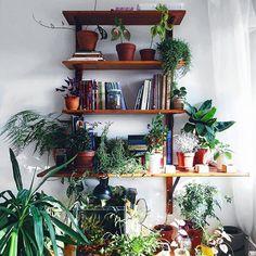 Messy shelf with plants. Plant Shelves, Shelf, Plants, Home Decor, Shelves, Room Decor, Home Interior Design, Shelving, Plant Ledge