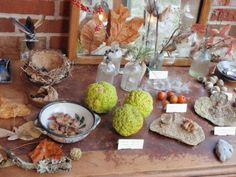 Nature table with labels. For more inspiring classrooms visit: http://pinterest.com/kinderooacademy/provocations-inspiring-classrooms/ ≈ ≈