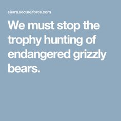 We must stop the trophy hunting of endangered grizzly bears.