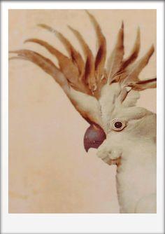 Cockatoo Head Art Print by Finandivy on Etsy, $25.00