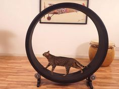 Cats can be just as geeky as their human counterparts when you give them Instagram cameras, feline-sized hamster wheels and iPad apps.