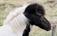 Horse Pictures - 56 Pics