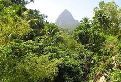 St. Lucia Rain Forest