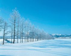 Snow Trees Under A Blue Sky - OGQ Backgrounds HD