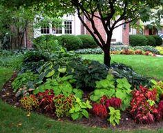 Shade Garden ~ coleus