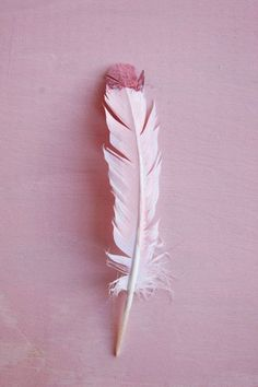 Rose feather dip