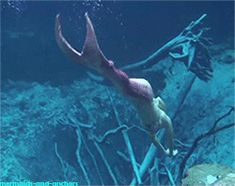 A real life mermaid melissa #mermaidmelissa Worlds most realistic real life mermaid: http://www.MermaidMelissa.com