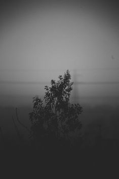 Canon 6d, Foggy Morning, Photo Series, Absolutely Stunning, The Outsiders, Sunset, Black And White, Pictures, Photography