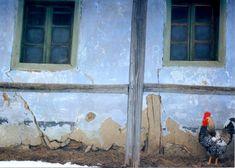 Cocosul Romania, Painting, Art, Art Background, Painting Art, Kunst, Paintings, Performing Arts, Painted Canvas