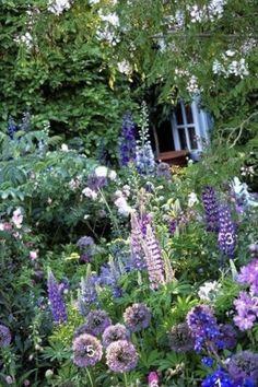 beautiful small cottage garden design ideas for backyard inspiration 86 Dutch Gardens, Belle Plante, Cottage Garden Design, Alpine Plants, Garden Types, Aquatic Plants, Garden Photos, Gras, Dream Garden