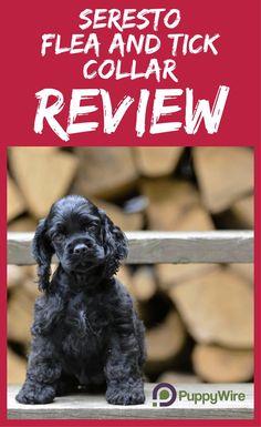 Seresto Flea Collar Reviews Will It Work On Your Dog Big Dog
