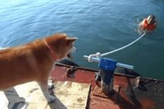 This shiba who is just trying to promote some self-reliance. | 21 Times Dogs Were Kind Of The Worst