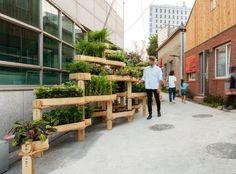 Sistema de jardinagem urbana: a nova maneira de deixar nossas cidades mais verdes - Ideias Diferentes