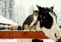 adorable team, they are! #cat #horse #animals
