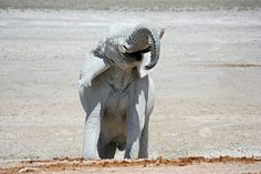NAMIBIA ... Elephant fun II