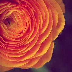 Orange flower photo AmellaKayPhotography ETSY