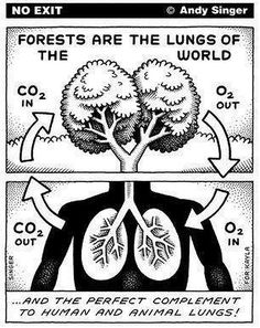 Circle Of Life And Breath Anchor chart science breathing-Connecting with intake of oxygen using trees and lungs as comparisons.Anchor chart science breathing-Connecting with intake of oxygen using trees and lungs as comparisons. Biology Classroom, Teaching Biology, Science Biology, Earth Science, Life Science, Cell Biology, Science Resources, Science Lessons, Science Education