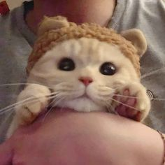 Cute Baby Cats, Cute Little Animals, Kittens Cutest, Cats And Kittens, Cute Babies, Animals And Pets, Funny Animals, Cat Icon, Photo Chat