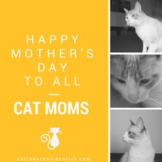 Happy Monther's Day to all cat moms from Cat Lady Confidential (http://catladyconfidential.com)