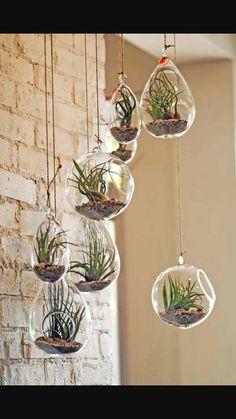 Hanging air plants. Beautiful!