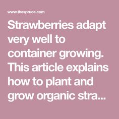 Strawberries adapt very well to container growing. This article explains how to plant and grow organic strawberries in a strawberry pot.