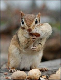 That's what is called squirreling it away, lol...