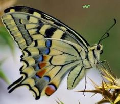 Butterfly by herland
