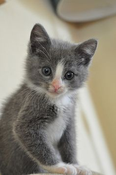 The single most adorable kitten EVER.