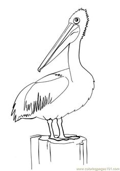 Ideas Bird Pictures Diy Draw For 2019 Bird Drawings, Animal Drawings, Pelican Art, Pelican Drawing, Bird Coloring Pages, Colouring, Inkscape Tutorials, Animal Templates, Black And White Drawing
