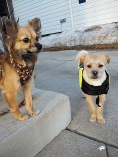 Leo and Spike